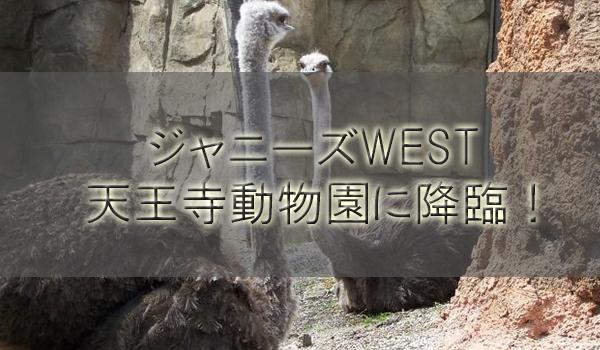 ジャニーズWEST天王寺動物園に撮影ロケで降臨!?Twitter妄想勢が落胆